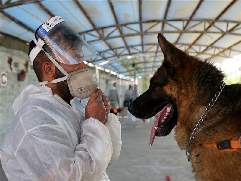perros médicos